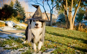 Picture holiday, dog, hat