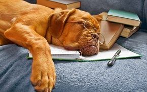 Picture books, dog, glasses, sleeping, notebook