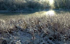 Picture frost, grass, snow, fog, Winter, morning