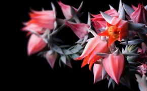 Wallpaper focus, Bud, flower