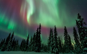 Picture winter, forest, the sky, night, Northern lights
