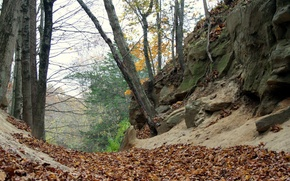 Picture foliage, Autumn, autumn, leaves, fall
