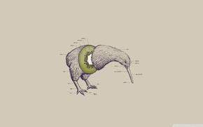 Picture bird, head, paws, beak, kiwi, kiwi, no wings