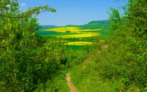 Picture greens, nature, green, field, Summer, summer, nature, fields