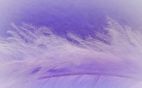 Wallpaper macro, a feather, fluff