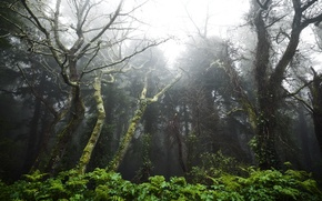 Picture Portugal, Portugal, Tropical forest between the towns of Sintra and Cascais, The rainforest between Sintra ...