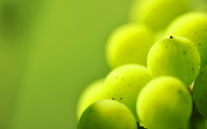 Picture macro, point, berry, green, veins, gooseberry