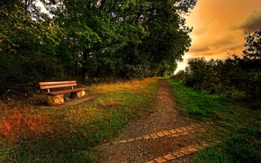 Picture the sky, trees, path, bench