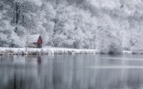Picture winter, forest, lake, house