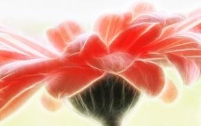 Picture flower, macro, line, petals, gerbera