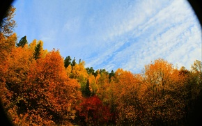 Picture autumn, forest, trees, nature, foliage, camera, lens