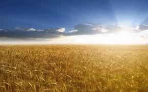 Wallpaper rays, the sun, the sky, wheat, Field