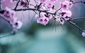 Picture nature, color, branch, Apple