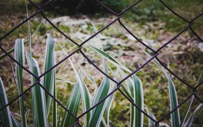 Picture summer, grass, the fence