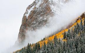 Wallpaper forest, fog, mountain