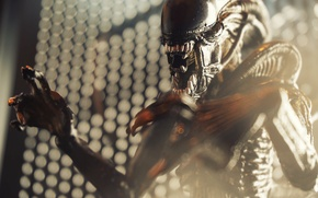 Picture being, Stranger, Alien, thing, Xenomorph, Xenomorph