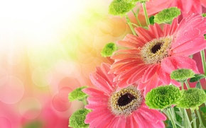 Picture drops, bouquet, drops, gerbera, bouquet, gerbera