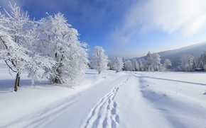 Picture snow, mountains, winter, nature, trees, clouds, the sky, landscape