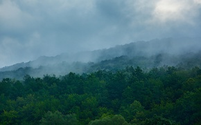 Picture hills, morning, morning, mountains, slope, hill, blue, trees, greens, haze, hill, green, hills, Ukraine, blue, ...