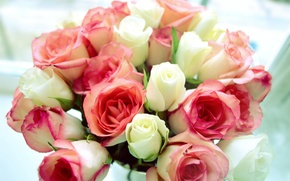 Picture white, flowers, pink, roses, bouquet, white roses, pink roses