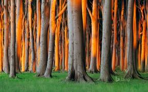 Picture forest, grass, trees, Germany, Mecklenburg-Vorpommern, Nienhagen