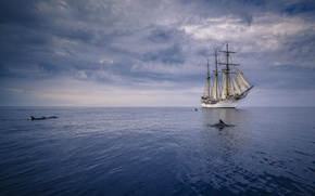Picture the ocean, ship, dolphins, sails