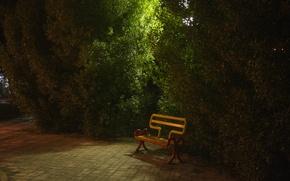Picture green, yellow, night, park, orang, khorramshahr