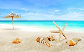 Wallpaper paradise, shore, seashells, blue, sea, beach, sea, sand, sand, shore, beach, shell, summer, starfish