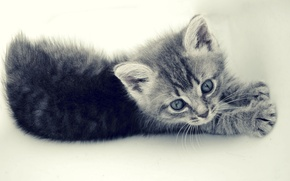 Picture cat, small, grey, pinstripes, kitty, cat