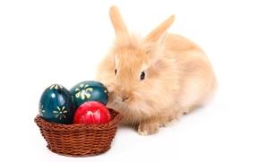 Picture egg, rabbit, Easter, easter
