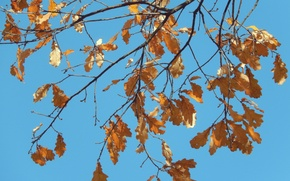 Picture autumn, the sky, leaves, sheet, background, widescreen, blue, wallpaper, widescreen, background, beautiful Wallpaper, the Wallpapers, …