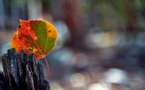 Picture autumn, macro, sheet, glare, bokeh