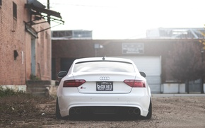 Picture Audi, white, rear, low, stance