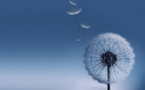 Picture dandelion, Galaxy S3, dandelion