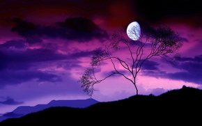 Wallpaper night, branches, tree, the moon, 156