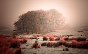 Picture frost, the sky, grass, trees, fog, the bushes