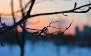 Wallpaper tree, the evening, winter, branch, Blik, branches, sunset