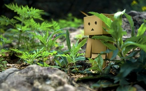 Picture grass, stones, walk, danbo, box