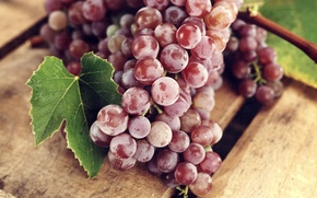 Picture leaves, red, berries, grapes, bunches