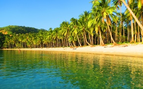 Picture beach, palm trees, the ocean, Philippines, The Nest