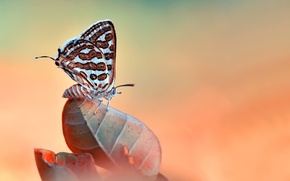 Picture macro, nature, sheet, butterfly, insect