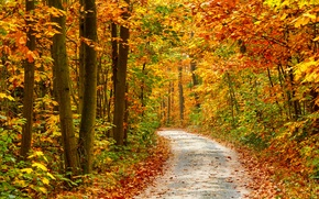 Picture road, autumn, trees, nature, road, trees, nature, time of the year, autumn seasons