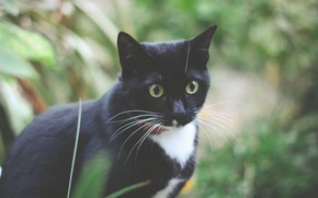 Picture animals, summer, cats, mood, black