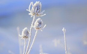 Picture flower, macro, snow