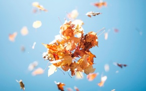 Picture autumn, the sky, foliage, up, bunch, leaves