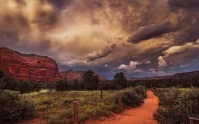 Picture road, landscape, nature, desert, plants, canyon