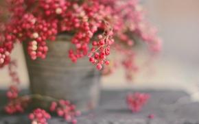 Wallpaper macro, berries, background