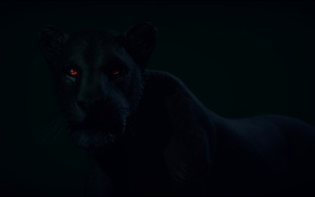Picture look, animal, predator, Panther, black, red eyes