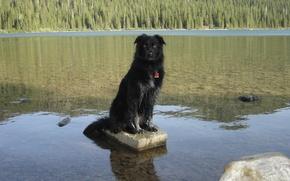 Picture Alberta, Dog, Canada, Water, Scenery, Border Collie, Waterton, Cameron Lake, the border collie