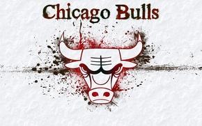 Picture background, logo, logo, basketball, Logo, NBA, Chicago Bulls, bull, NBA, Basketball, Chicago bulls